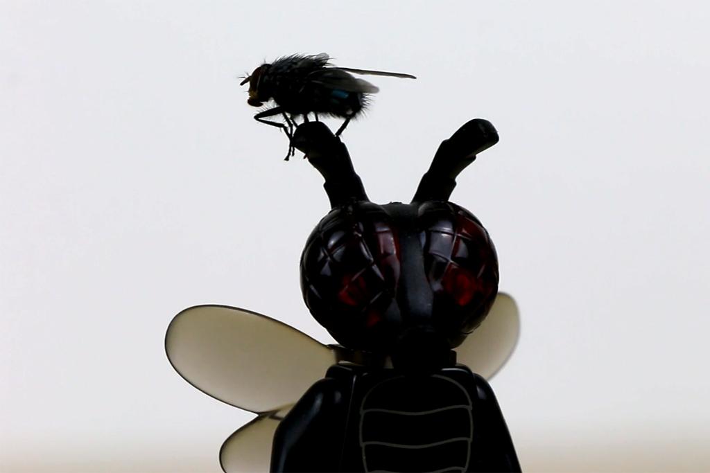 Zwei Fliegen auf einmal | © Andres Lehmann