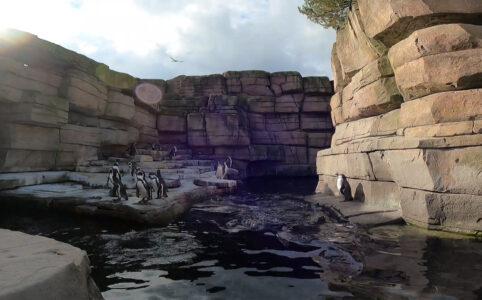 Pinguine im Tierpark Hagenbeck